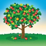 Apple Tree Orange